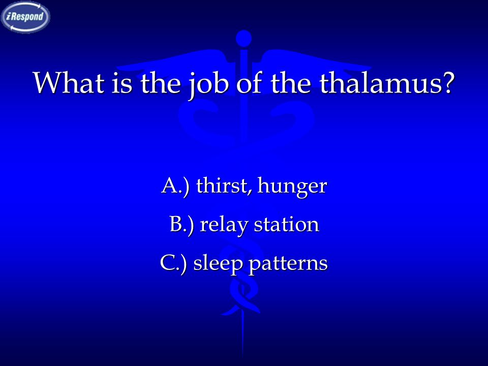 What is the job of the thalamus