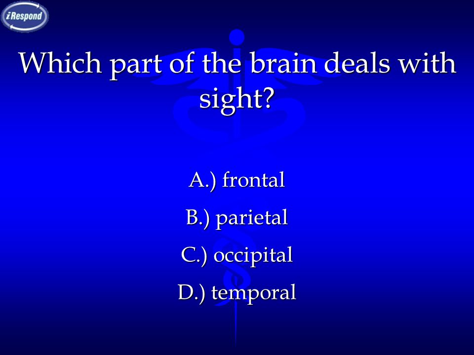 Which part of the brain deals with sight