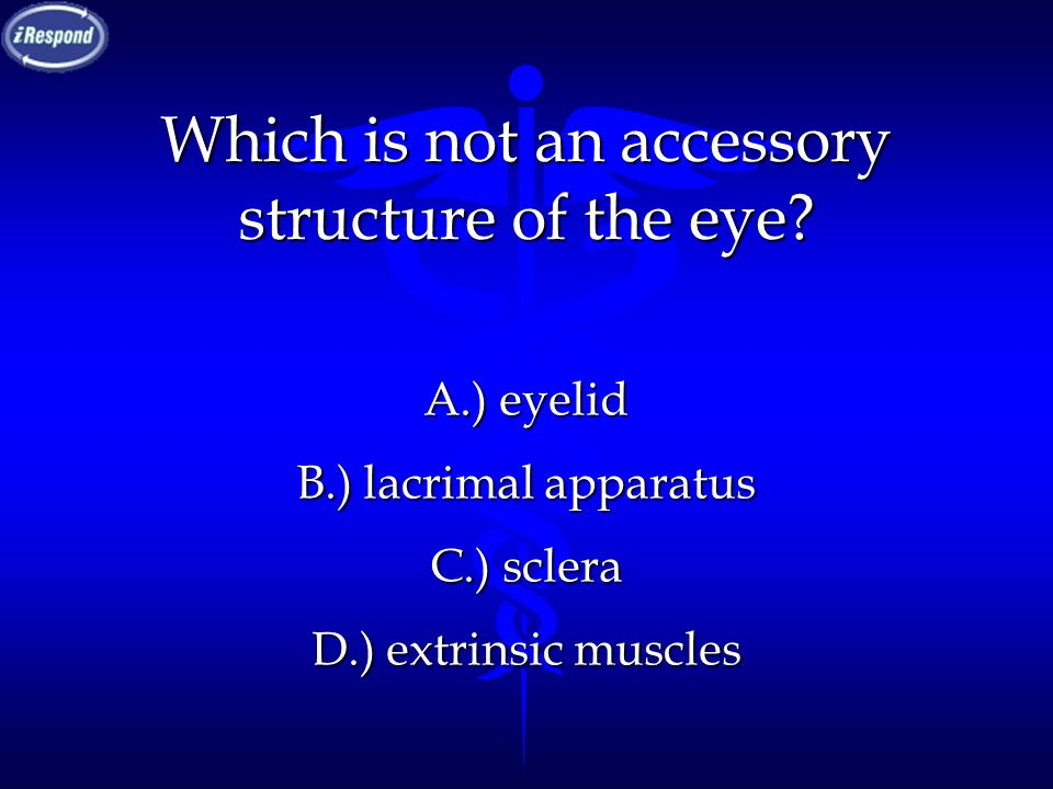 Which is not an accessory structure of the eye