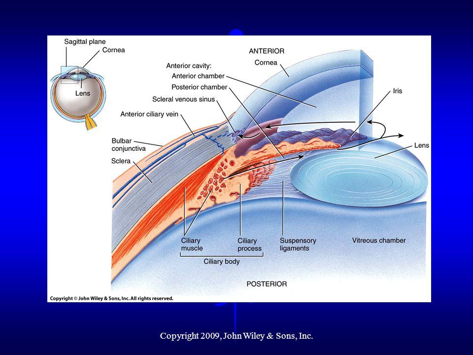 Cavities of the Eyeball