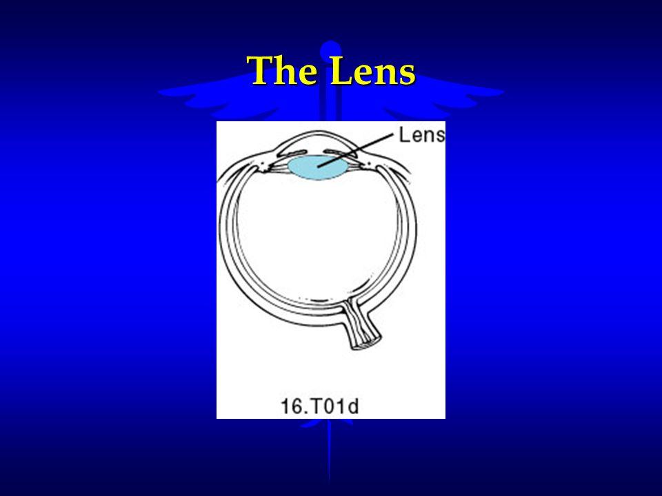 The Lens