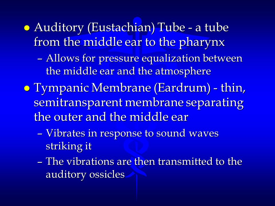 Auditory (Eustachian) Tube - a tube from the middle ear to the pharynx