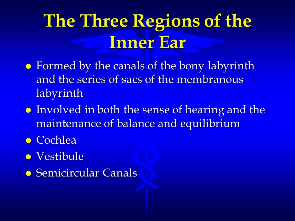 The Three Regions of the Inner Ear