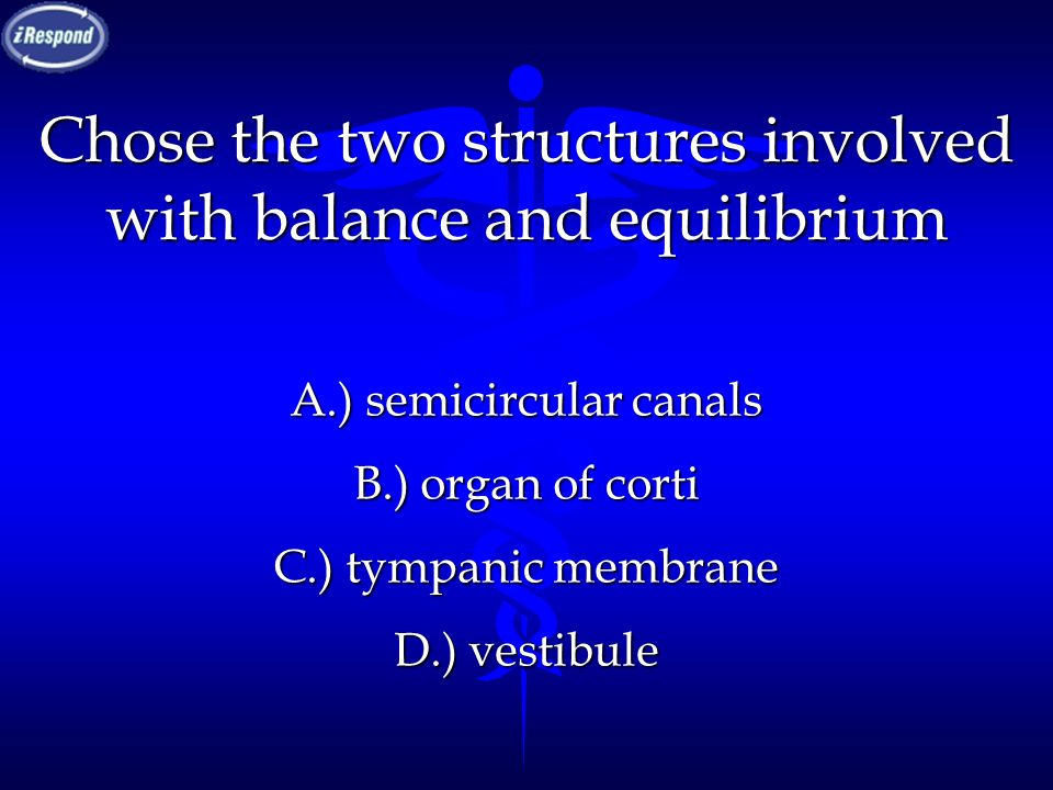 Chose the two structures involved with balance and equilibrium
