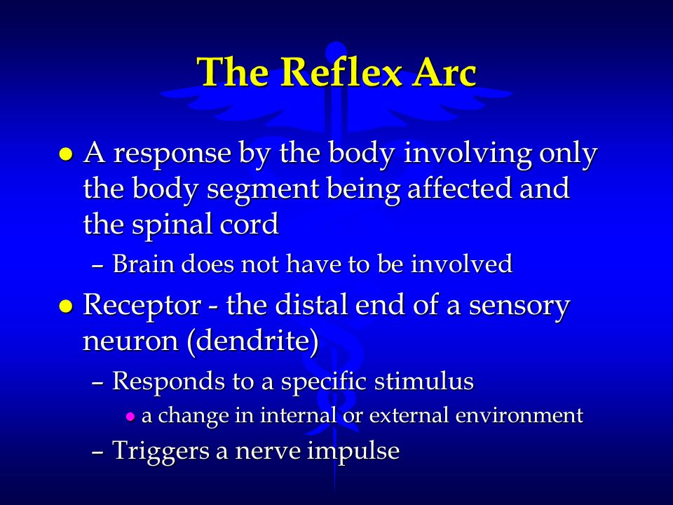 The Reflex Arc A response by the body involving only the body segment being affected and the spinal cord.