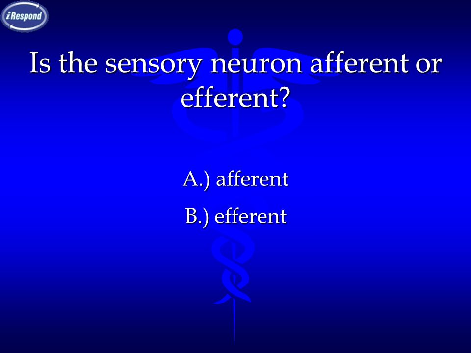 Is the sensory neuron afferent or efferent