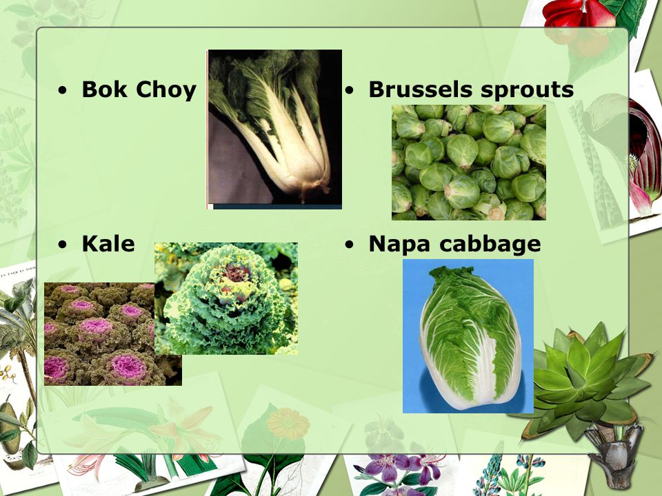 Bok Choy Brussels sprouts Kale Napa cabbage