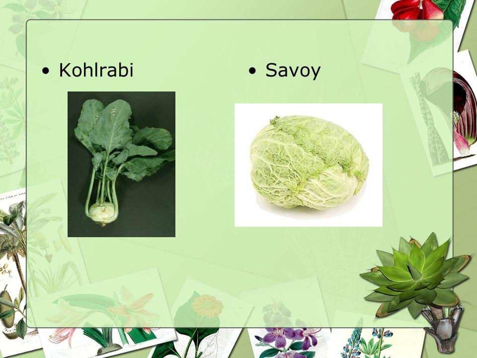 Kohlrabi Savoy