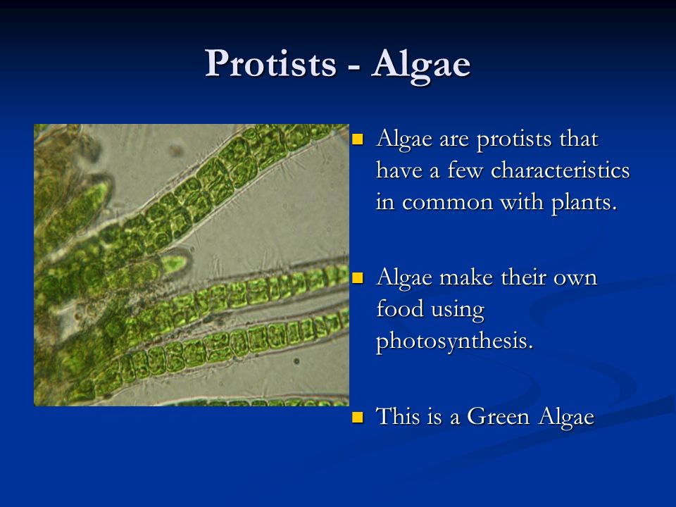 Protists - Algae Algae are protists that have a few characteristics in common with plants. Algae make their own food using photosynthesis.
