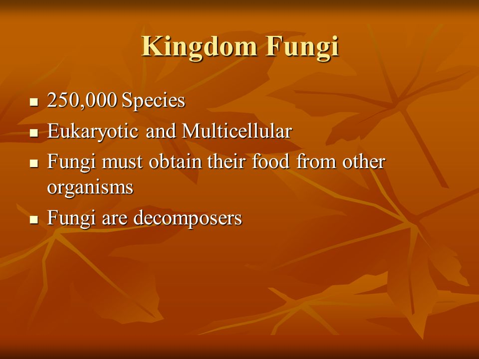 Kingdom Fungi 250,000 Species Eukaryotic and Multicellular