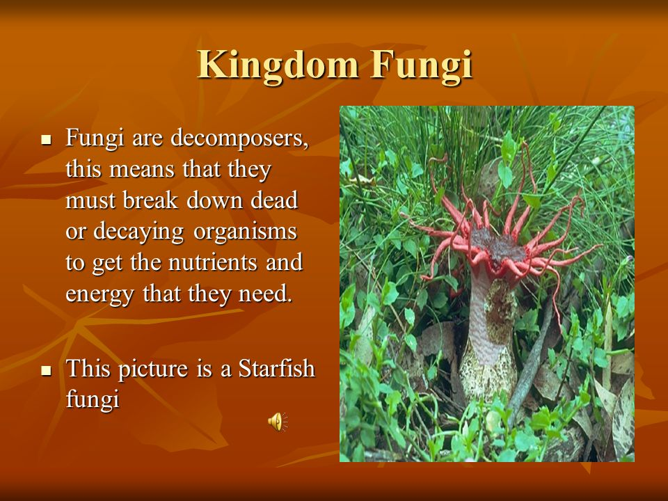 Kingdom Fungi Fungi are decomposers, this means that they must break down dead or decaying organisms to get the nutrients and energy that they need.