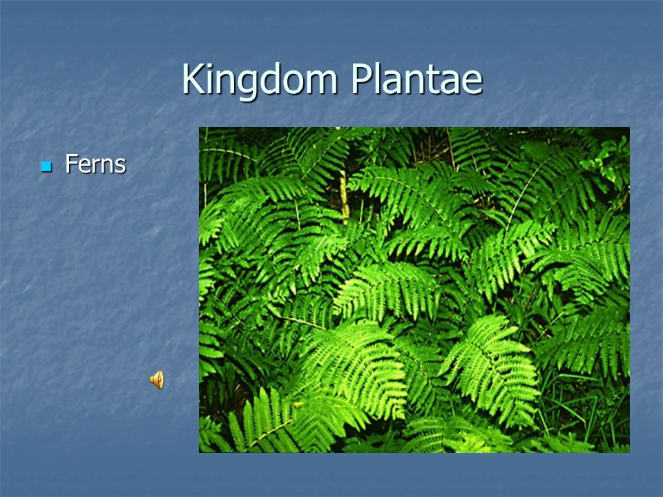 Kingdom Plantae Ferns