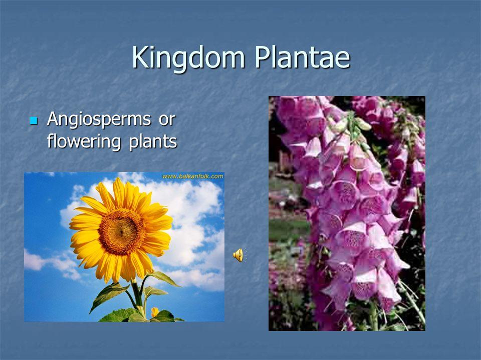 Kingdom Plantae Angiosperms or flowering plants