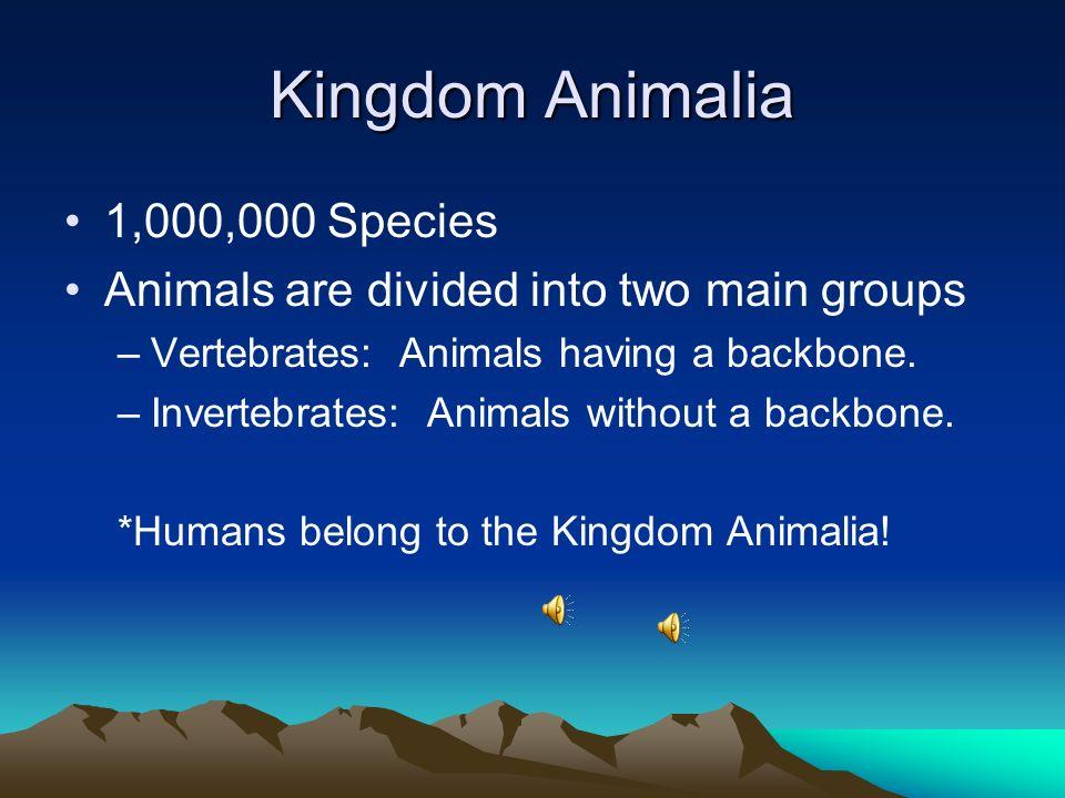 Kingdom Animalia 1,000,000 Species