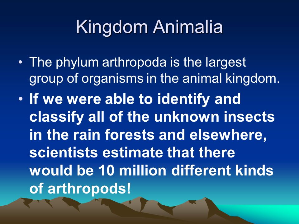 Kingdom Animalia The phylum arthropoda is the largest group of organisms in the animal kingdom.