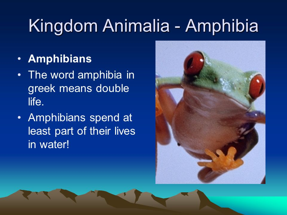 Kingdom Animalia - Amphibia