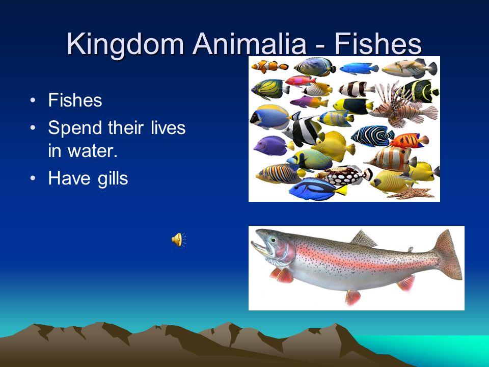 Kingdom Animalia - Fishes