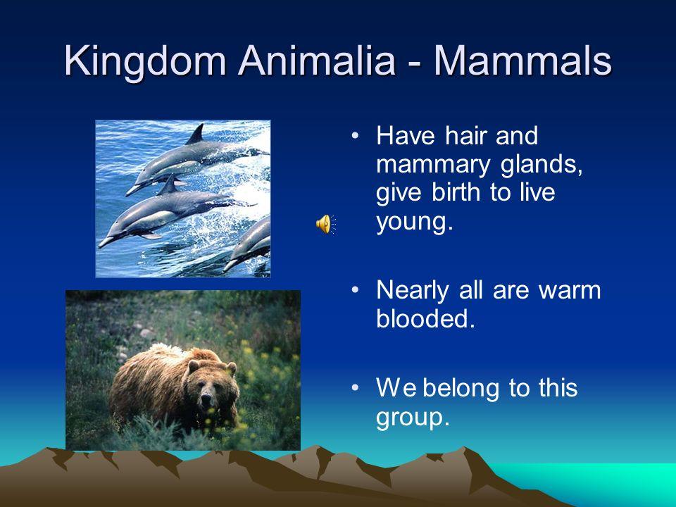 Kingdom Animalia - Mammals