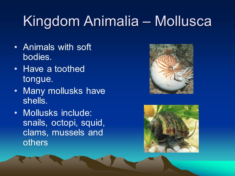 Kingdom Animalia – Mollusca