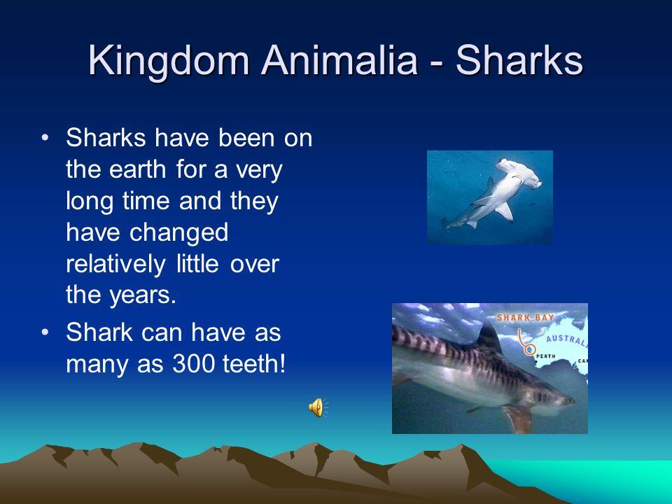 Kingdom Animalia - Sharks