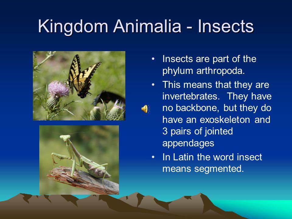 Kingdom Animalia - Insects