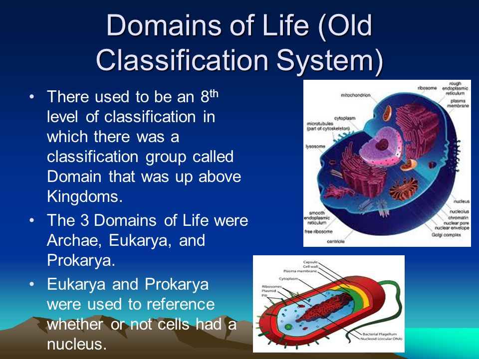 Domains of Life (Old Classification System)