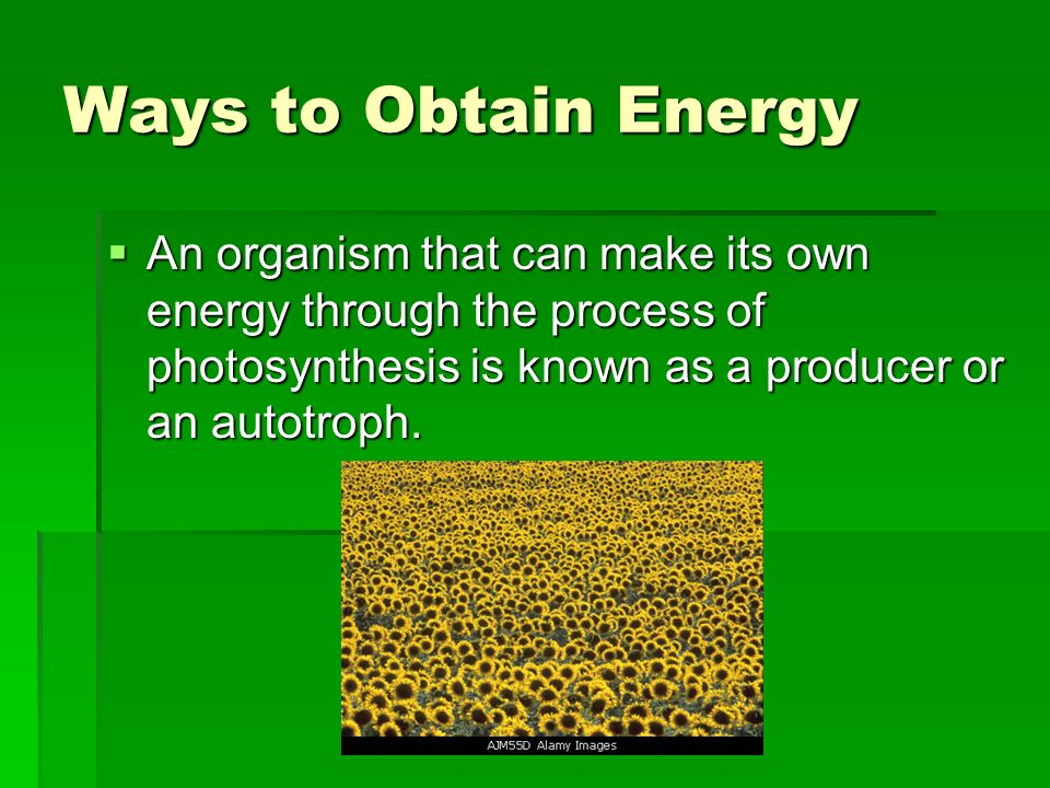 Ways to Obtain Energy An organism that can make its own energy through the process of photosynthesis is known as a producer or an autotroph.