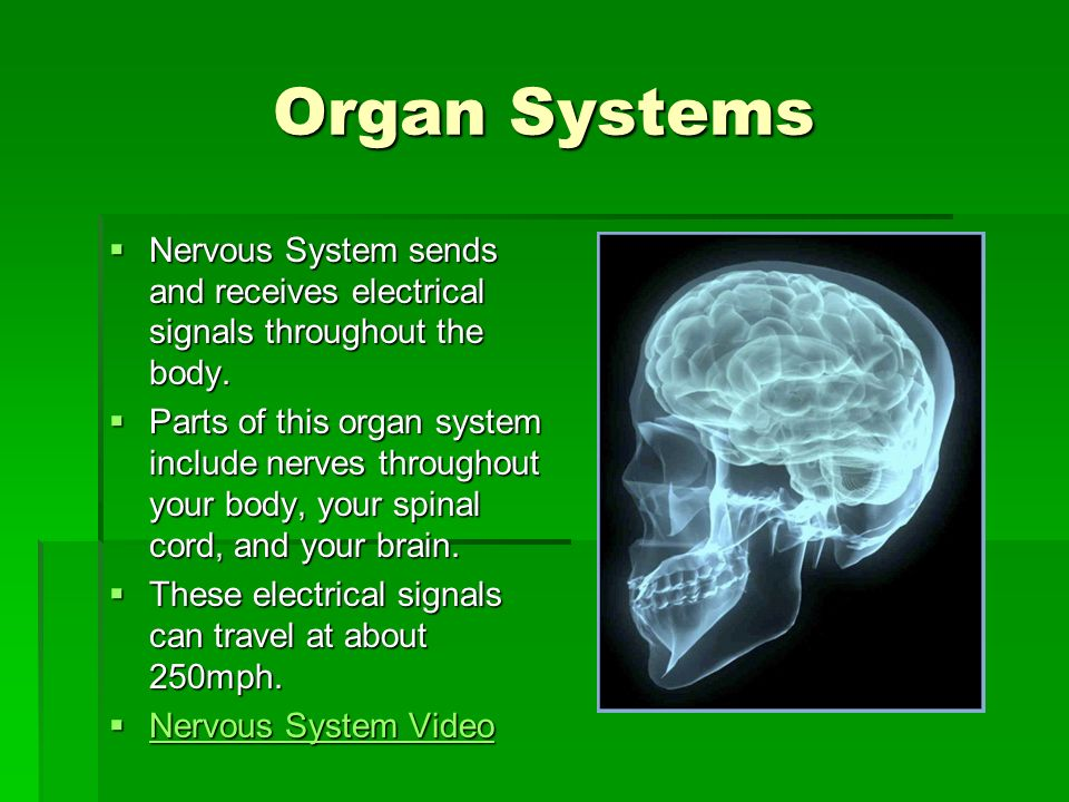Organ Systems Nervous System sends and receives electrical signals throughout the body.