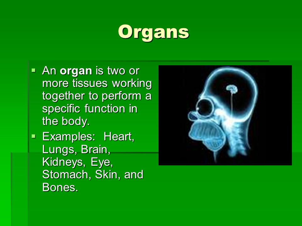 Organs An organ is two or more tissues working together to perform a specific function in the body.