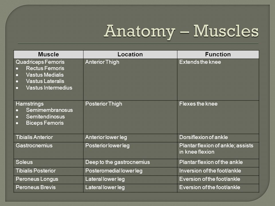 Anatomy – Muscles Muscle Location Function Quadriceps Femoris