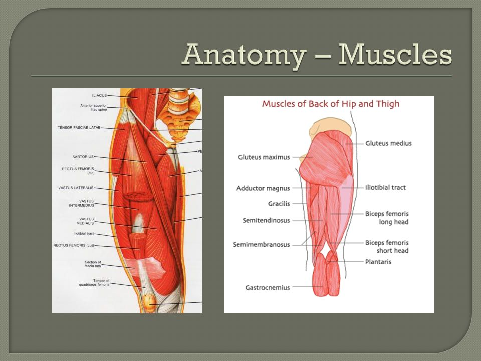Anatomy – Muscles