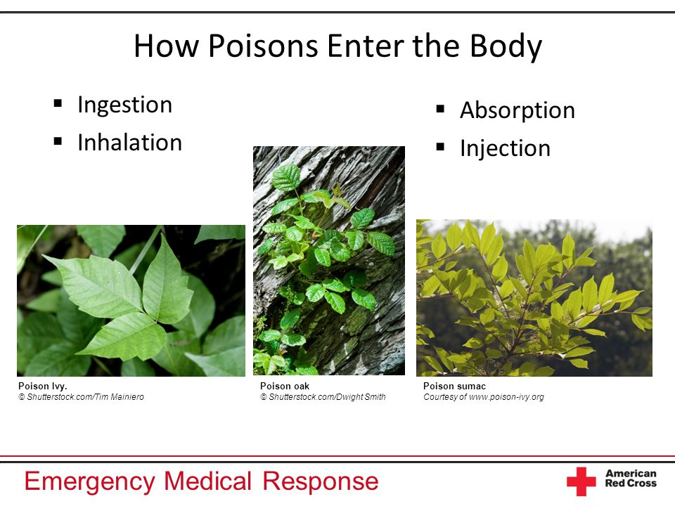 How Poisons Enter the Body