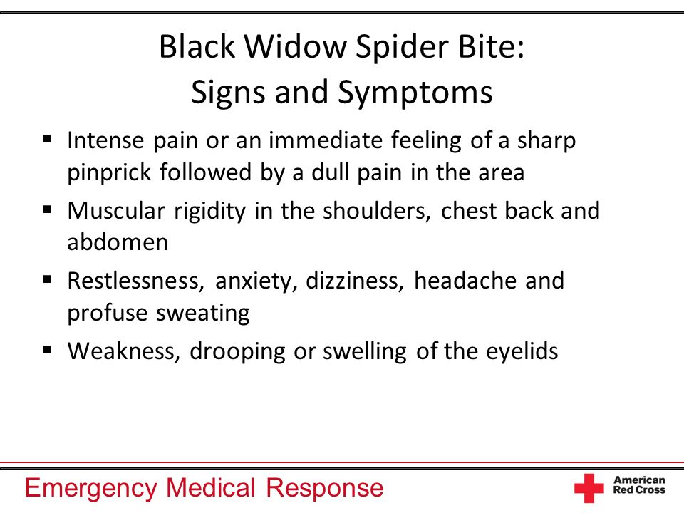 Black Widow Spider Bite: Signs and Symptoms