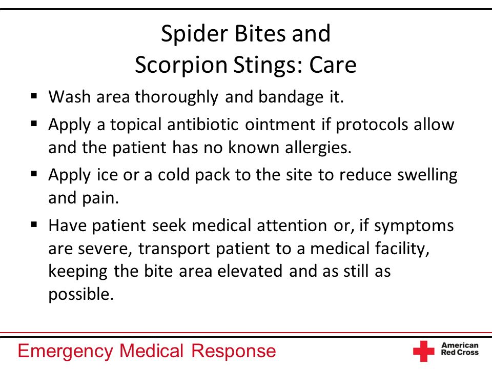 Spider Bites and Scorpion Stings: Care