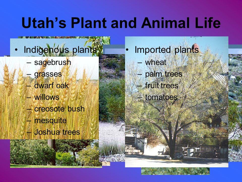 Utah's Plant and Animal Life