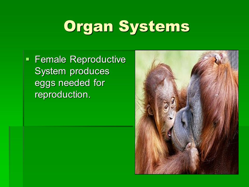 Organ Systems Female Reproductive System produces eggs needed for reproduction.
