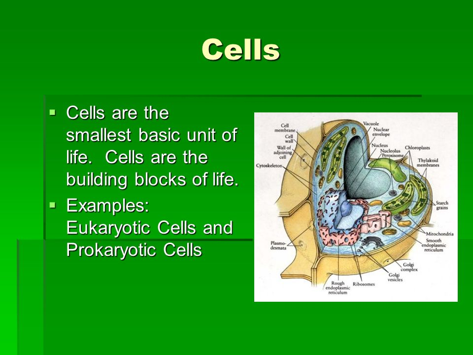 Cells Cells are the smallest basic unit of life. Cells are the building blocks of life.
