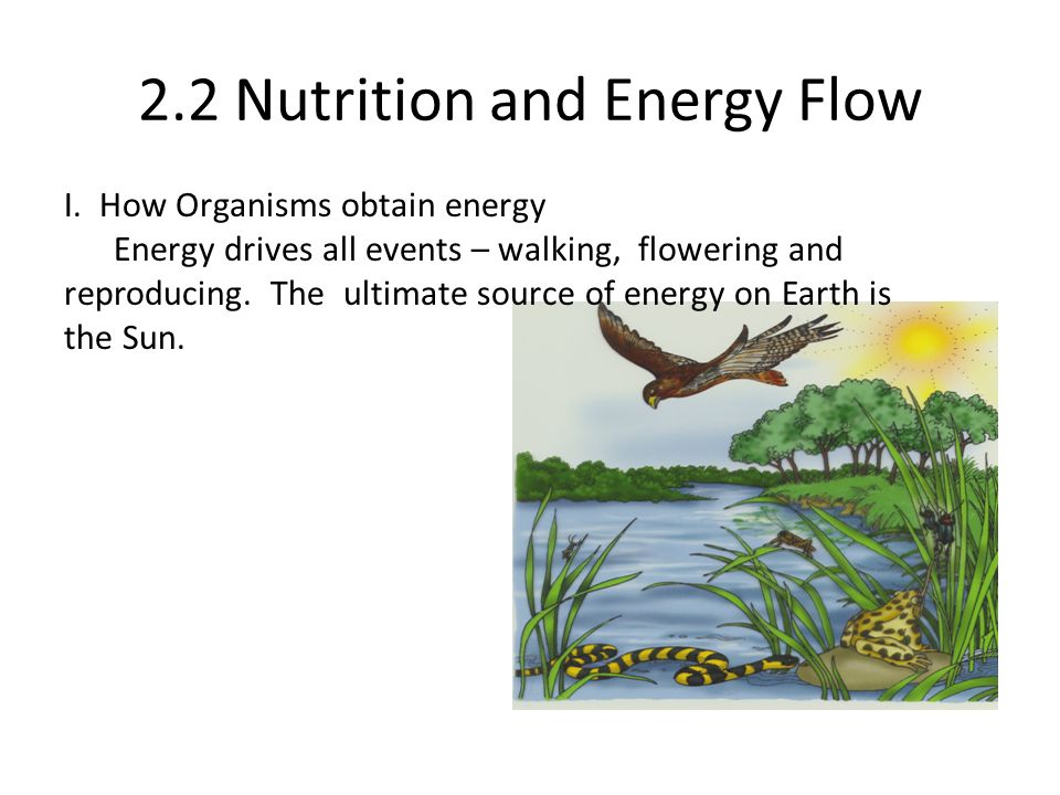 2.2 Nutrition and Energy Flow