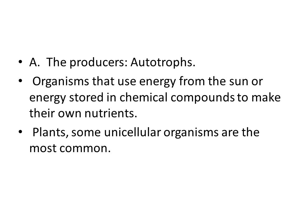 A. The producers: Autotrophs.