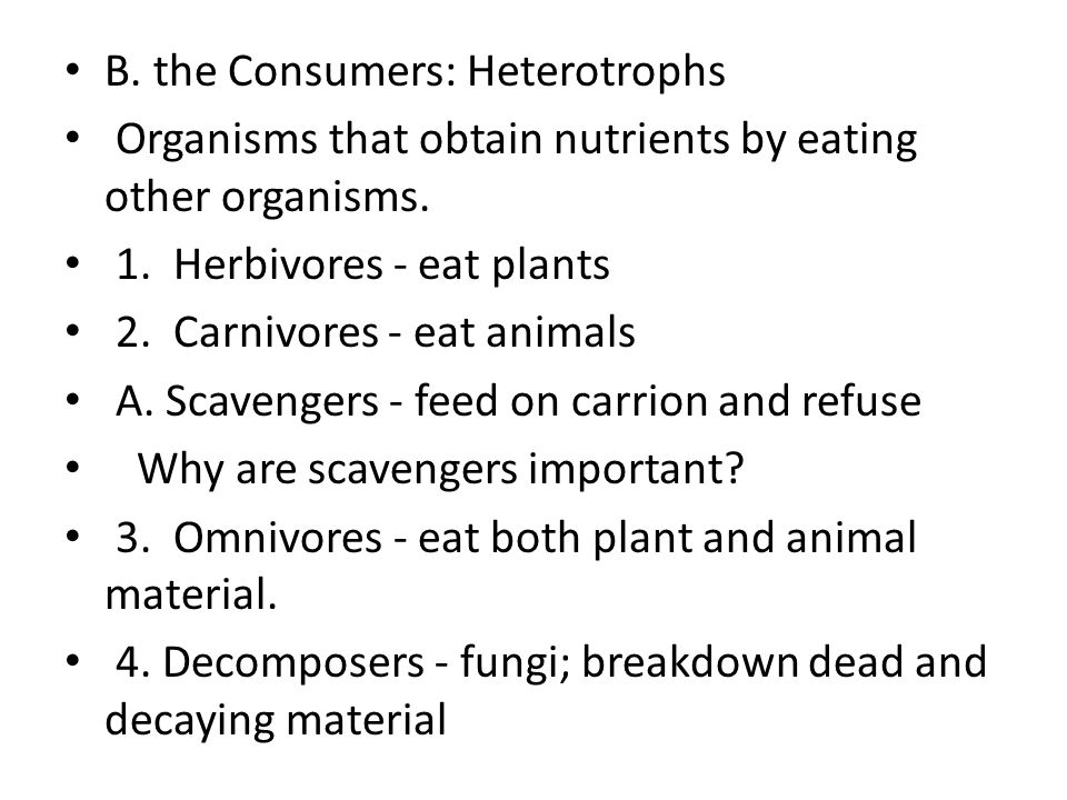B. the Consumers: Heterotrophs