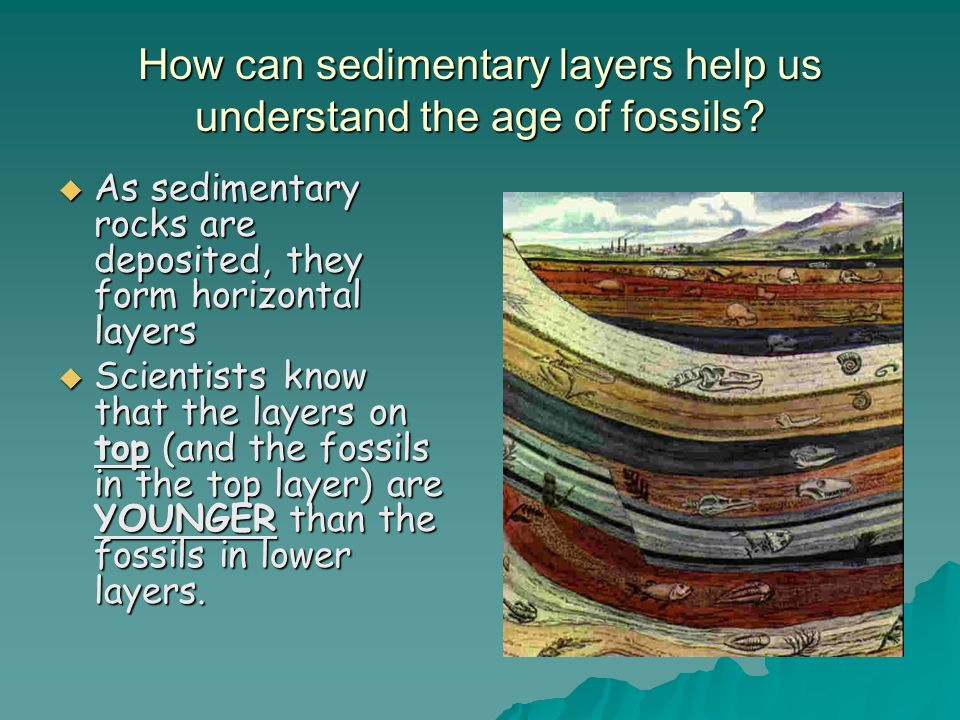 How can sedimentary layers help us understand the age of fossils