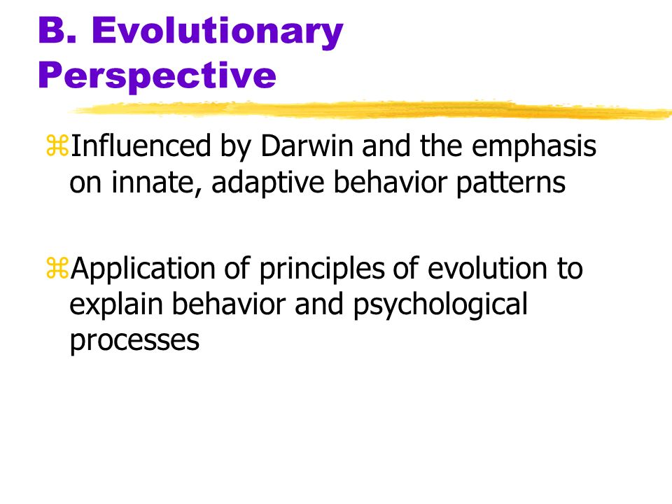 B. Evolutionary Perspective