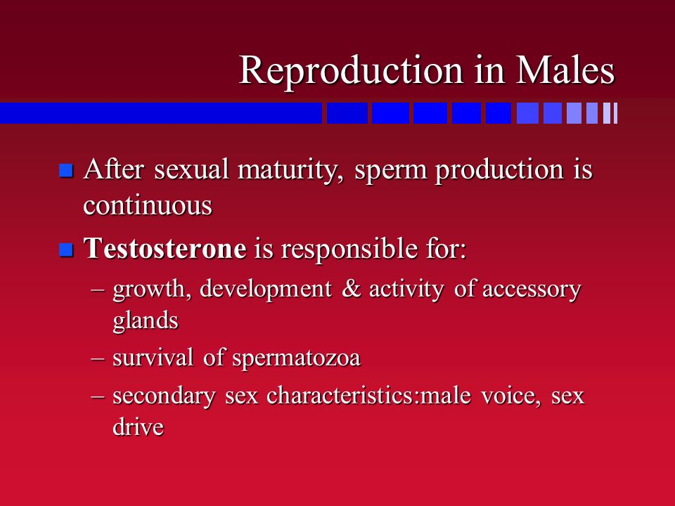 Reproduction in Males After sexual maturity, sperm production is continuous. Testosterone is responsible for: