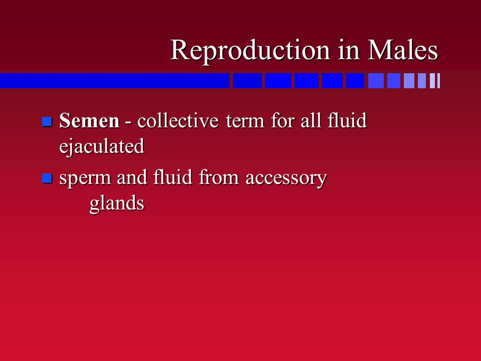 Reproduction in Males Semen - collective term for all fluid ejaculated