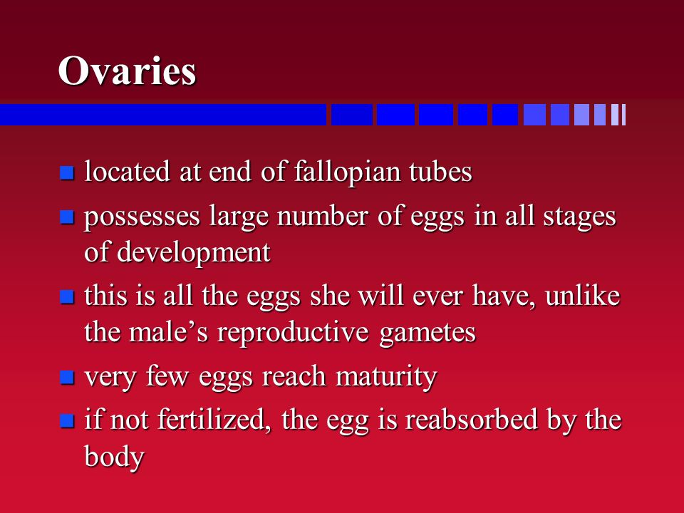 Ovaries located at end of fallopian tubes