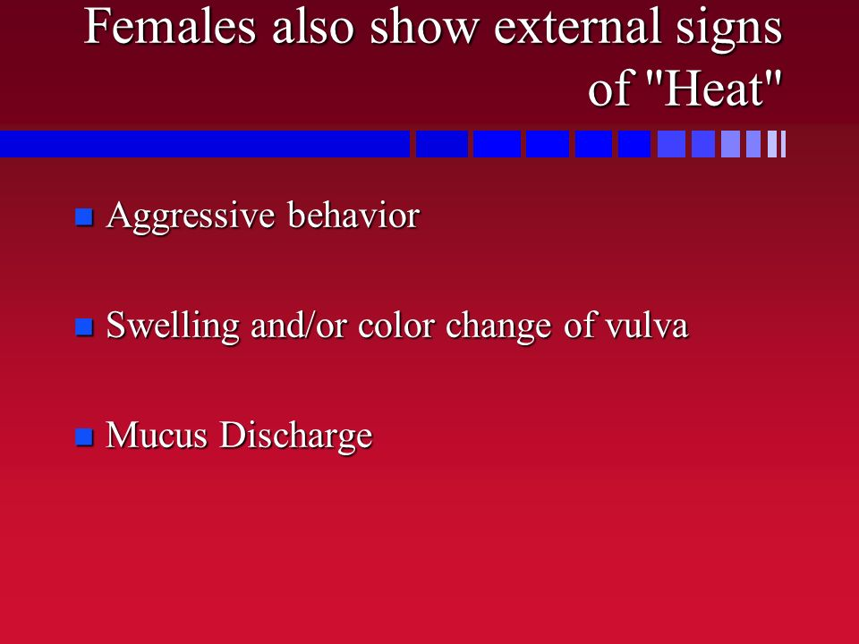 Females also show external signs of Heat
