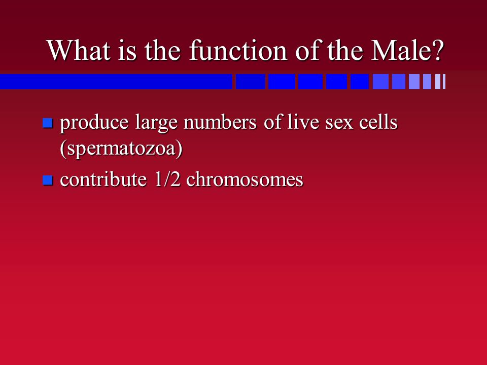 What is the function of the Male