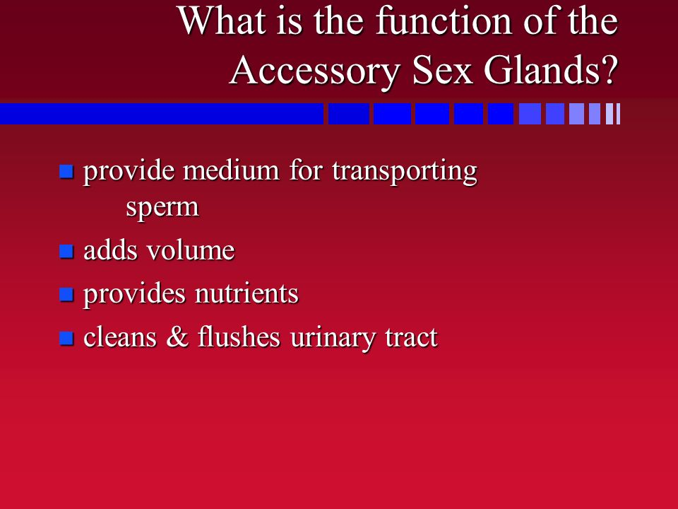 What is the function of the Accessory Sex Glands