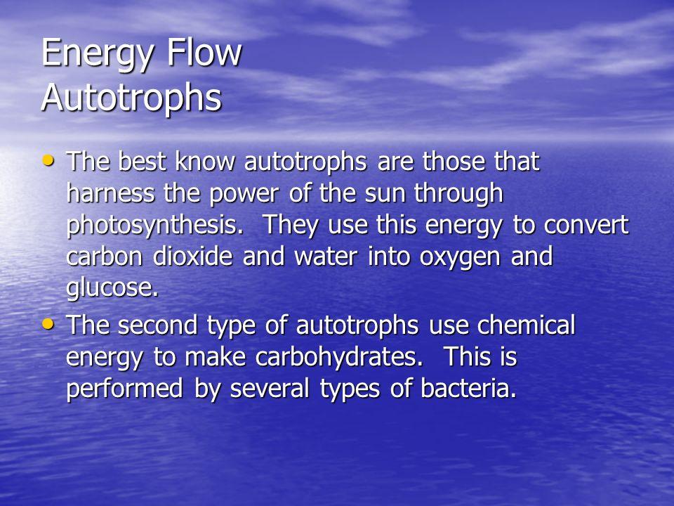 Energy Flow Autotrophs