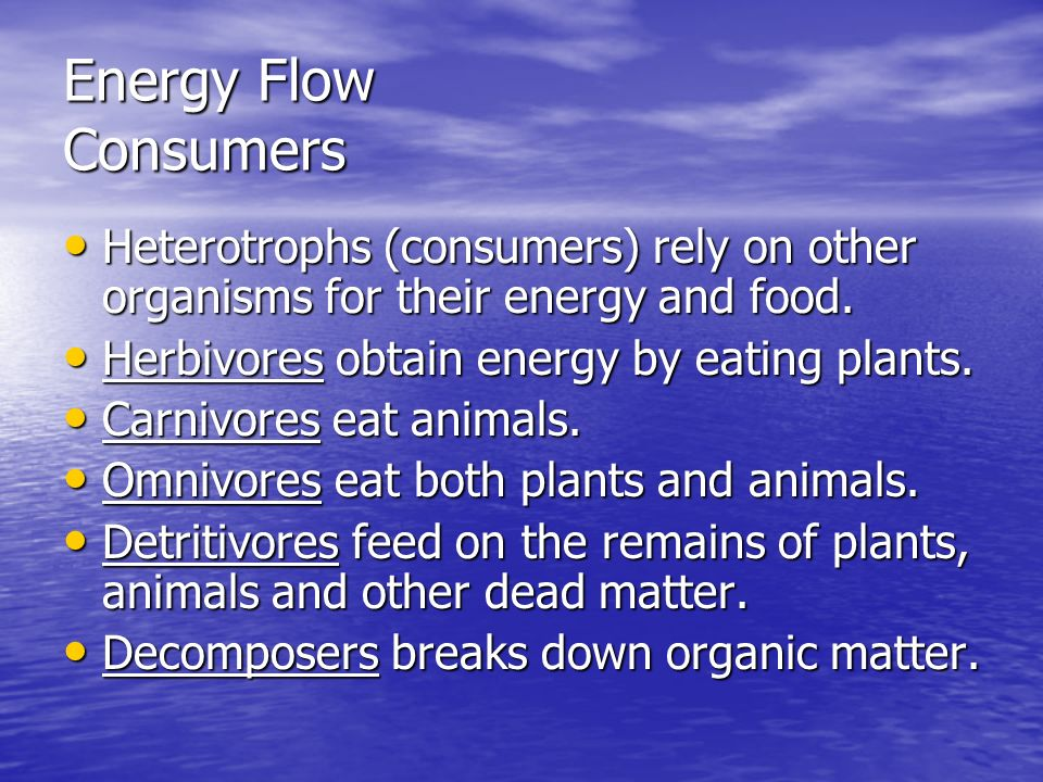 Energy Flow Consumers Heterotrophs (consumers) rely on other organisms for their energy and food. Herbivores obtain energy by eating plants.